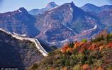 八達嶺紅葉嶺紅葉已進入最佳觀賞期 風景美如畫