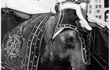 美國女星康妮·克勞森1942年的迷人老照片