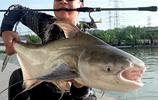 """建議愛釣魚男人:咬咬牙拿下這""""鯽魚竿""""定位12米,好用又不貴"""