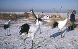 1985年,冬天的黑龍江,看大家如何度過寒冷的冬季