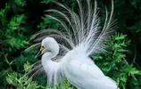 鷺,鸛形目鷺科鳥類的種類