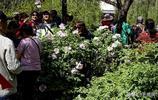 吉林市有一個地方,大家稱它牡丹園,賞花的人比花還多