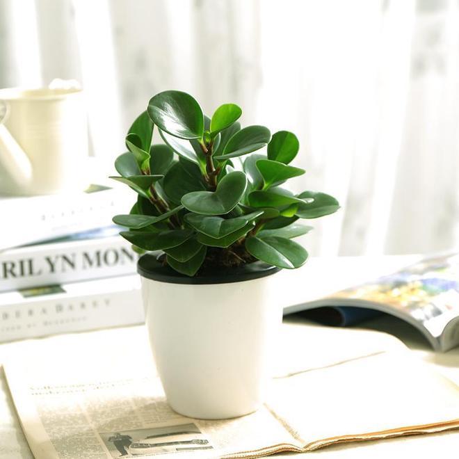 家裡只有仙人掌和蘆薈?你也太慘了吧,這幾款盆栽漂亮又珍貴