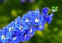 景觀花境篇——之花境常用50種植物