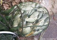 自制窩料配方,讓我每次輕鬆釣獲30公斤