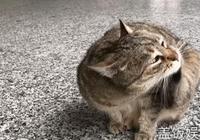 這14歲的虎斑貓,是一隻擁有公共養老金的四足小獸