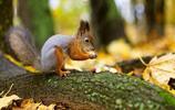 動物圖集:松鼠的園林 害羞的萌松鼠