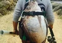 自制釣魚小藥的方法,適合自己的才是最好的