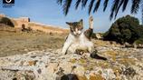 貓在風景裡已經存活了300萬年 沒有貓的景區是不完美的