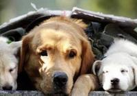 主人讓狗狗自己賣狗,因價格昂貴無人願買,狗狗的背影令人心酸