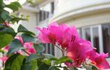 一年四季不停開花,讓你的陽臺每天都充滿顏色