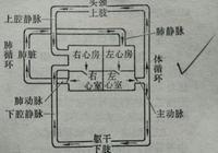 北京寶仁中醫院:心臟為什麼從不休息?
