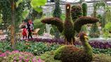 這裡是北京市四環以內最大的植物園,裡面的植物千奇百怪