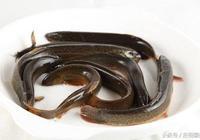 水中人蔘——泥鰍,泥鰍養生的吃法推薦