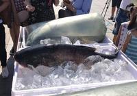 這一次讓哈爾濱中央大街出名的是胸肌和江魚
