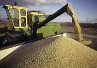 13年之後大豆出現熊市,和糧食被壟斷有關麼?