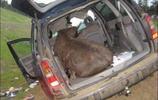 車主在野外停車,卻來了一位不速之客,結果損失慘重