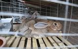 80後大學生懷揣3萬元辭職回鄉養兔子,開局就賠了8000元,咋回事