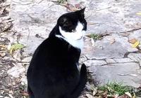一直以為是我在保護貓咪,為它構造一個世界,直到被它治癒