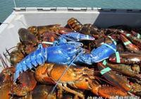 最昂貴的5種海鮮,一斤過萬元,吃過一口的人都是土豪