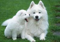 為什麼很多狗明明很凶,被主人打卻不會反抗?不只是因為忠誠