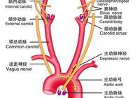 動脈硬化的正常值是多少?