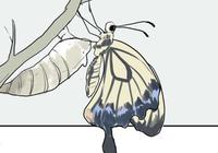 畫風很舒服的漫畫:繭蛹