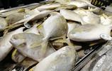 實拍年貨超市:春節放假置辦年貨 大蝦鯧魚黃花魚個個都是硬菜兒