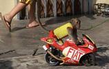 街頭一隻獼猴吸引了大家的眼光,走近一看,眾人紛紛為其點贊!