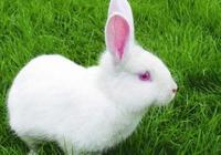 趣味測試:四隻小兔子,最可愛的是哪隻?測測你是善良還是好欺負