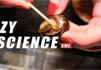 吃田螺吃到滿嘴田螺籽,可軟體動物不應該是卵生的嗎?