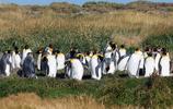 南極企鵝以及喜歡偏暖氣候的企鵝!