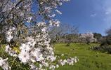北京周邊的千年古村,古樸幽靜杏花爭豔,春遊不來這裡可惜了!