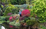 英國老人20年只做一件事,房屋空地修成一座百花園