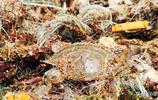 海邊發現一張破漁網,仔細翻了翻竟然發現了一道餐桌美食!