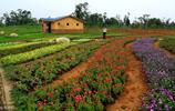 鄉村農業如何發展?打造休閒、度假、體驗為一體的休閒觀光農業