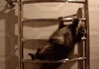 勉為其難地給你牽一下吧,貓主子就是這麼潔身自好!