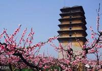 土門峪二龍塔看桃花,據說這是西安當下最美的景了!