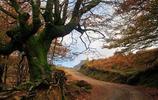 """環球旅行分享:世界僅存的""""魔法森林""""之一,西班牙戈爾韋亞公園"""