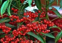 3種好吃又能欣賞的水果,陽臺上種一盆,一年四季不愁吃!