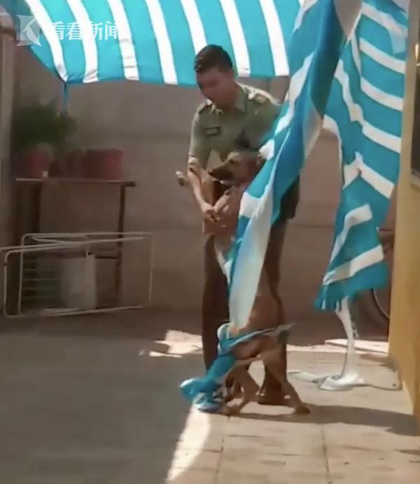 視頻|狗狗見人持刀慘叫求饒 發現是好人後立馬撲懷裡