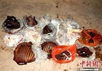 雲南勐臘森警破獲非法持有槍支狩獵案