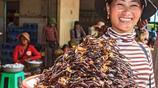柬埔寨小吃油炸蜘蛛,十分美味,味道如炸雞