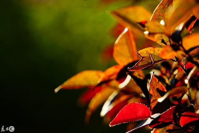 春天來了,秋景還遠嗎