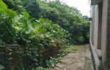 再次探訪東莞無人屋:一年前我到過這裡,如今又殘舊了