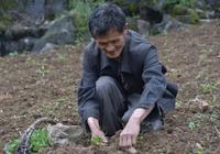 酉陽李溪鎮:栽種朝天椒 助農增收