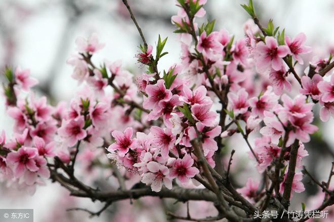 滿樹繁華,色彩絢麗,來欣賞吧