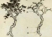 樹的畫法及步驟教程,怎樣畫各種樹,畫樹技法分步解析教程