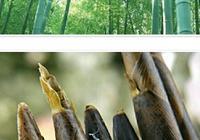 下聯:筍乃竹,竹乃筍,卻是竹皮非筍皮。上聯如何對?
