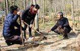 江西遂川:71歲老農愚公移山造林致富帶動山民增收